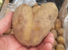 heart_potato